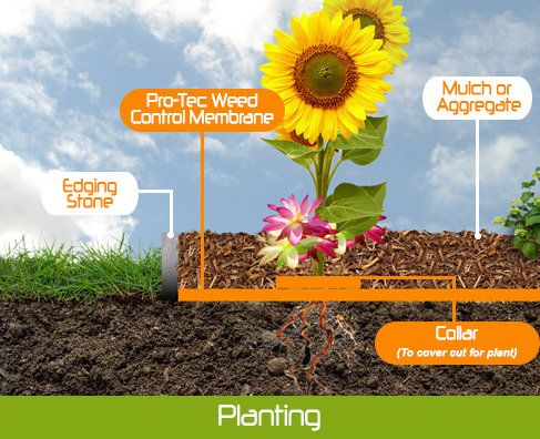 Diagram of Weed mat and flower bed