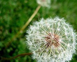 Picture of a Weed