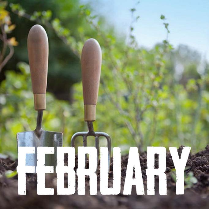 Picture of a February Garden