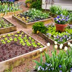 Picture of a Garden with Raised Beds