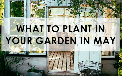 picture of What to plant in your garden in may
