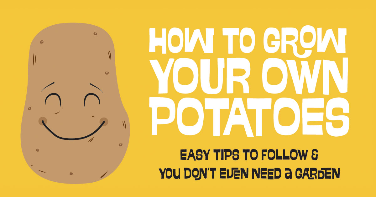 How To Grow Your Own Potatoes Easy To Follow